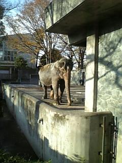 象のはな子