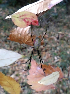 落ち葉を網に付けて