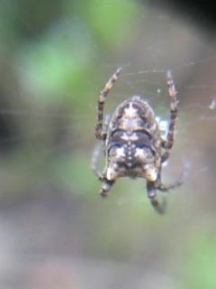このクモは?