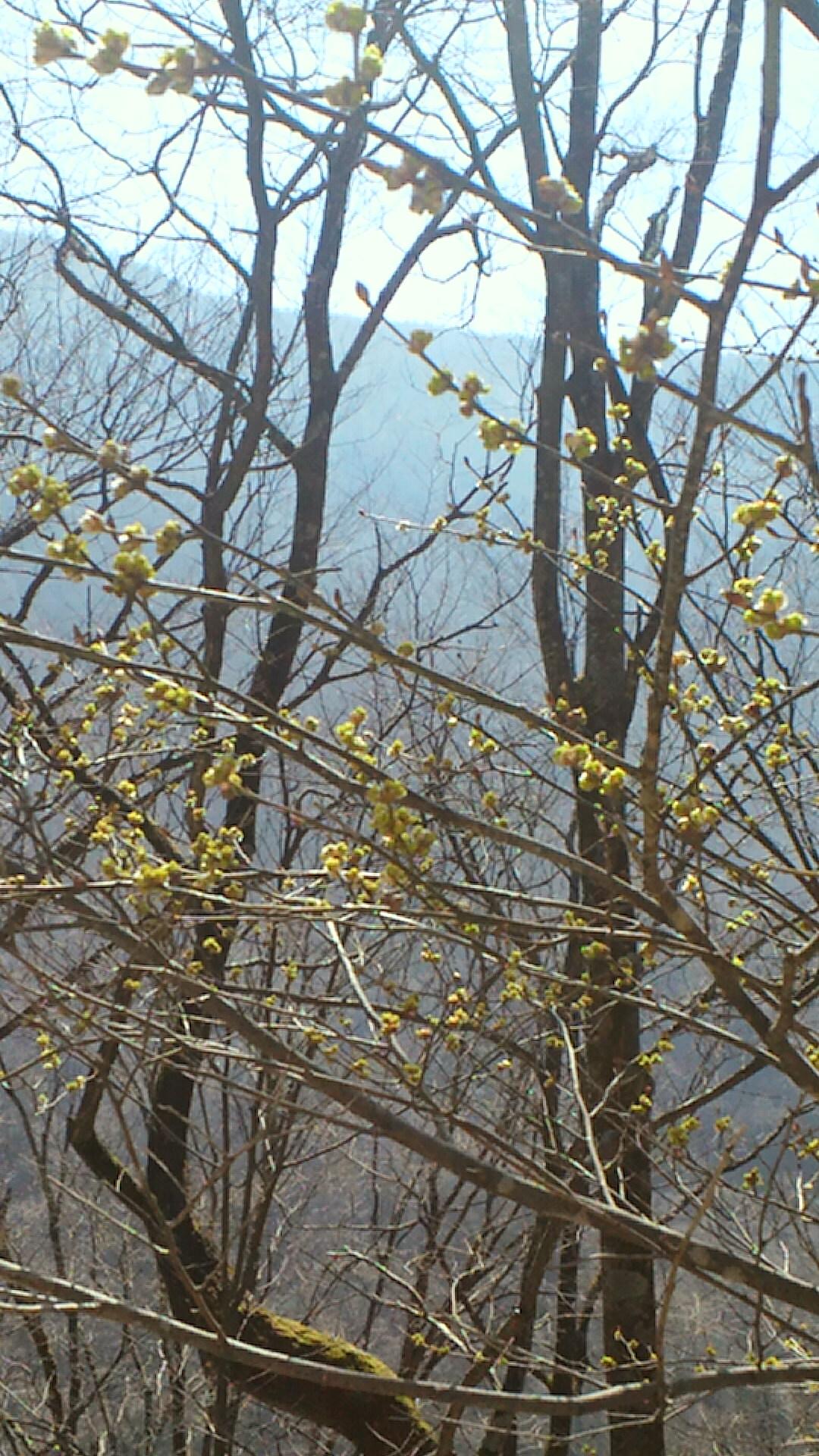 春がきたー!
